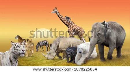 Wild animals group collage #1098225854
