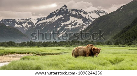 Grizzly Bear of Shores of Alaska. #1098244256