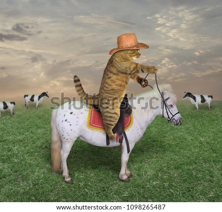 The cat cowboy on a horse grazes his cows. #1098265487