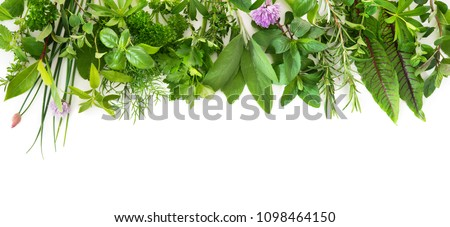 Various kinds of fresh garden herbs isolated on white background Royalty-Free Stock Photo #1098464150