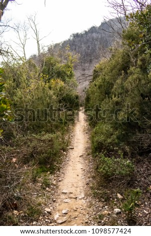 Wild path in the nature #1098577424