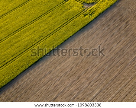 drone image. aerial view of rural area with cultivated fields of rape seed in sunny spring day. latvia #1098603338