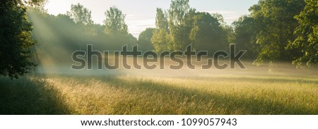 Magic summer morning, and morning mist over the field #1099057943