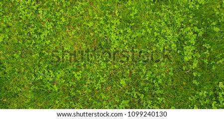 green grass field background #1099240130