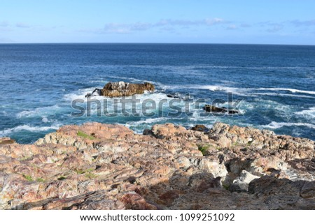 Beautiful beach in Hermanus with a cute dassie sitting on a rock in South Africa #1099251092