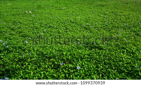 Green grass field background with little purple flowers and stone.  #1099370939