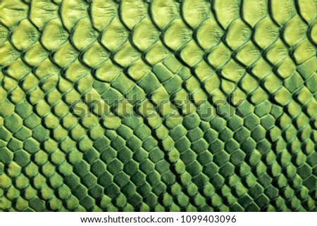 Skin reptile green crocodile skin texture snake background close-up  #1099403096