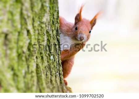 squirrel in parck