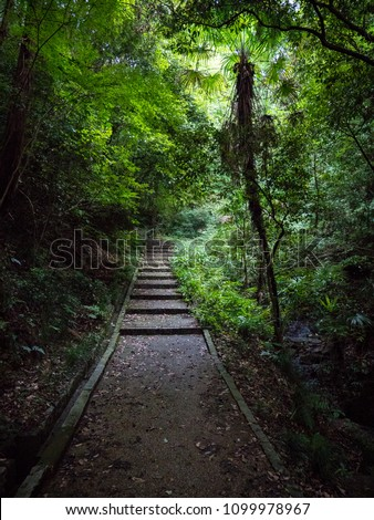 Stairs through lush and mysterious mountain forest #1099978967