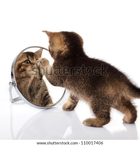 kitten with mirror on white background. kitten looks in a mirror. #110017406