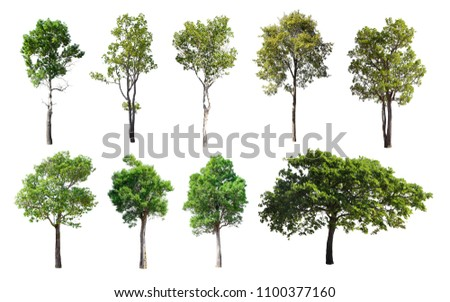 Collection of Isolated Trees on white background. A beautiful trees from Thailand. Suitable for use in architectural design or Decoration work. Used with natural articles both on print and website. #1100377160
