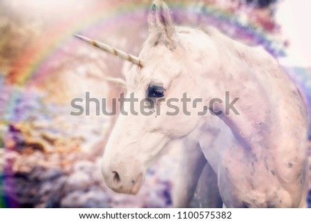 Real unicorn with rainbow around