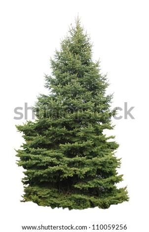 A christmas pine tree #110059256