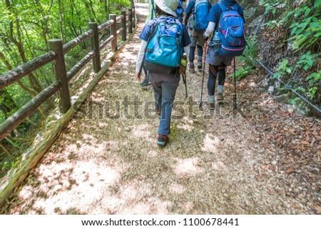 Climbing trail of fresh green #1100678441