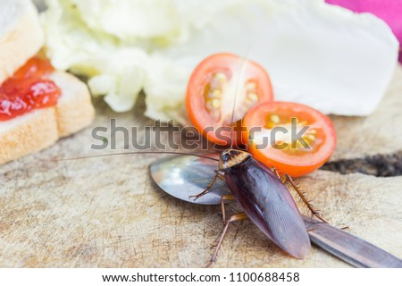 The problem in the house because of cockroaches living in the kitchen.Cockroach eating whole wheat bread on white background(Isolated background). Cockroaches are carriers of the disease.