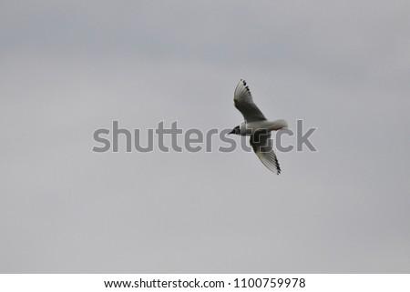 bird flying in alaska #1100759978