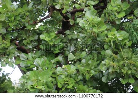 Leaves    green    leaf #1100770172