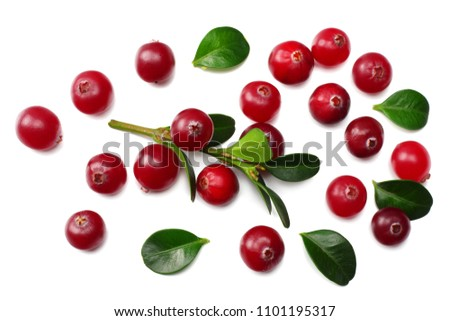 Cranberry with green leaves isolated on white background. top view #1101195317