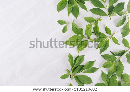 Fresh airy summer background - young green leaves on white wood plank, top view, copy space. #1101210602