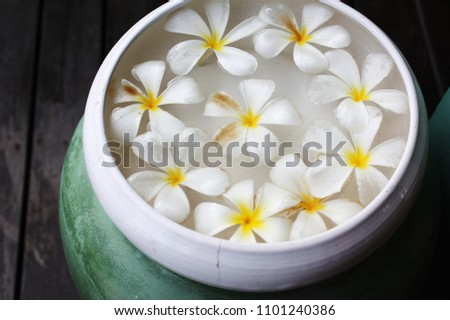 White and yellow plumeria flowers in water spa #1101240386