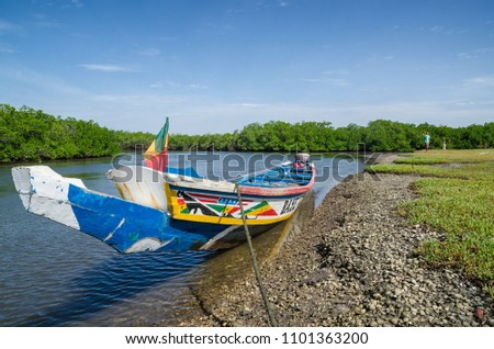 Colorful wooden boat or pirouge moored in mangrove forest of Sine Saloum Delta, Senegal, Africa #1101363200