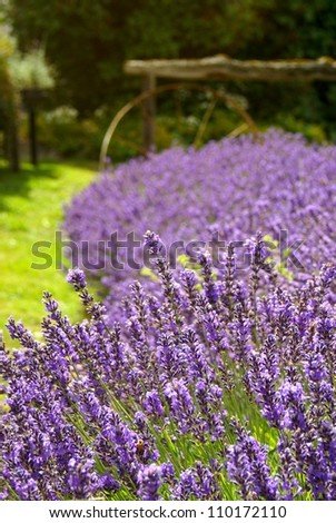 Lavender and wheel #110172110