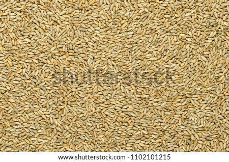 Rye grains, surface and background. Secale cereale, grain, cover and forage crop. Member of wheat tribe. Used for flour, bread, beer, whiskey, vodka and animal fodder. Food photo, close up from above. #1102101215