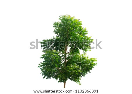 Tree on White Background isolated. #1102366391