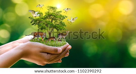 Concept Nature reserve conserve Wildlife reserve tiger Deer Global warming Food Loaf Ecology Human hands protecting the wild and wild animals tigers deer, trees in the hands green background Sun light #1102390292