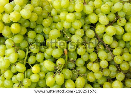 Close up of a large cluster of green grapes #110251676