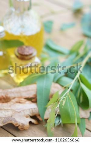 eucalyptus essential oil and eucalyptus #1102656866