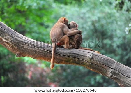 Two monkey friends on tree #110270648