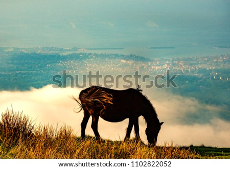 Silhouette of wild horse grazing at La Rhune mountain. View of ocean coast at the bottom. French Basque Country. France.Toned photo.