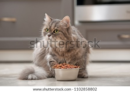 Cute cat near bowl with food at home #1102858802