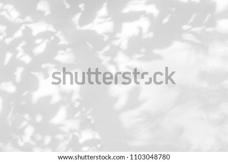Abstract gray shadow background of natural leaves tree branch falling on white wall texture for background and wallpaper, black and white monochrome tone #1103048780