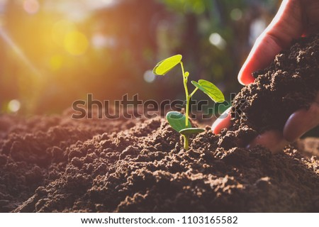 Hand with green young plant growing in soil on nature background Royalty-Free Stock Photo #1103165582