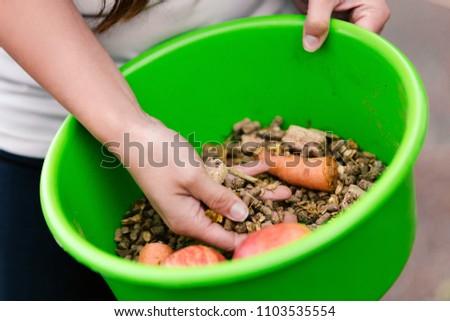 bowl of organic horse fodder, closeup with femals hands, horse bait #1103535554
