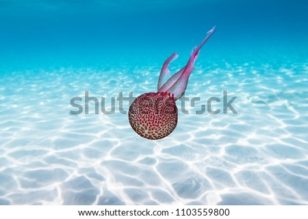 Beautiful jellyfish in a natural environment