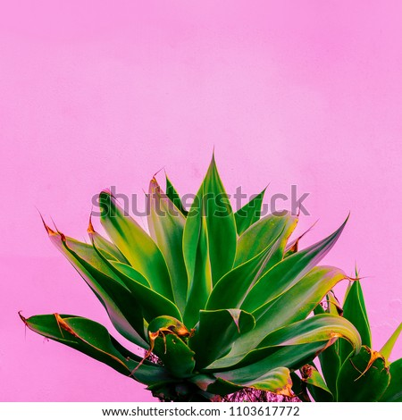 Plants on pink concept. Tropical plant. Canary island #1103617772
