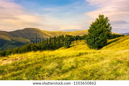 beech forests of Carpathian mountains in evening. hills of Svydovets mountain ridge in the distance. wonderful travel destination in Carpathian mountains Ukraine #1103650862