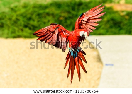 The scarlet macaw #1103788754