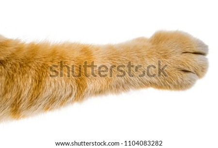cat paw isolated on white background Royalty-Free Stock Photo #1104083282
