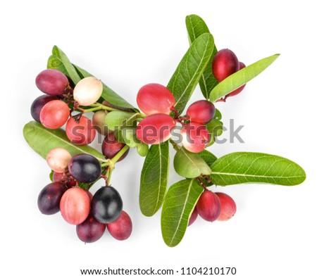 Karanda Fruits  isolated on white background #1104210170