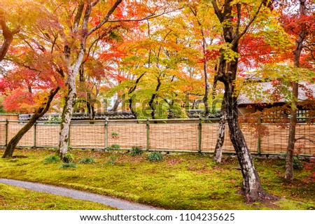 Colorful autumn leaves and walk way in park, Kyoto in Japan. #1104235625