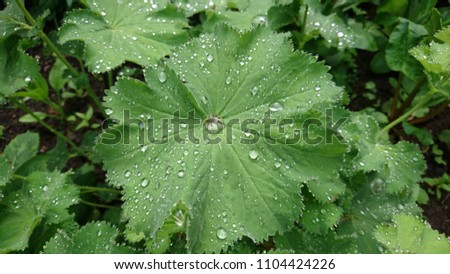 Big Green leaves with water droplets on them #1104424226