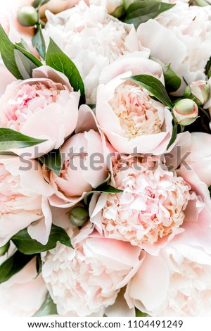 Bouquet of a lot of peonies of pink color close up. Flat lay, top view. Peony flower texture.