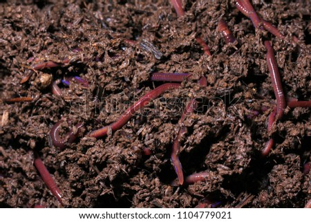 Worm castings organic fertilizer, worm castings manure. There are many benefits to using worm castings in the garden especially. A popular and natural method of providing great soil health.  #1104779021