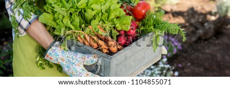 Unrecognizable female farmer holding crate full of freshly harvested vegetables in her garden. Homegrown bio produce concept. Sustainable living. #1104855071