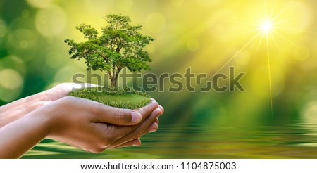 environment Earth Day In the hands of trees growing seedlings. Bokeh green Background Female hand holding tree on nature field grass Forest conservation concept #1104875003