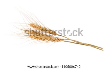 Ear of barley on white background Royalty-Free Stock Photo #1105006742